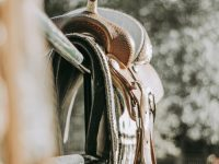 A guide for horse owners on buying horse saddle pads